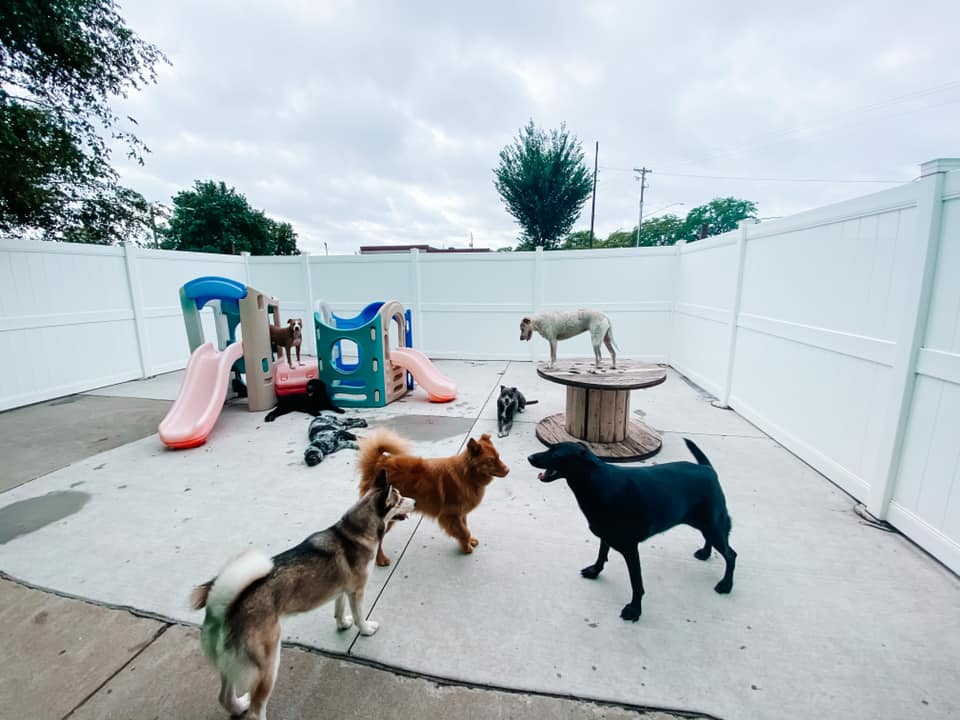 8 dogs play together in the outdoor play area